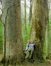 two girls leaning against tree